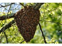 Bee swarm collected