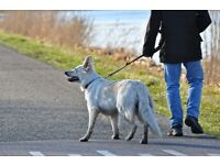 Early Morning Dog Walker/ Sitter - Eccles & Surrounding