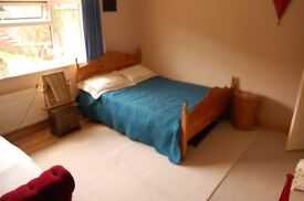 Large double room with a View for dog and cat friendly person! ( available NOW ) Hollingbury