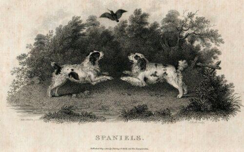 C.1801 SPANIELS COPPER ENGRAVING BY JOHN SCOTT, ARTIST H.B. CHALON LONDON