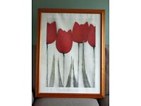 Large Tulip print in pine frame