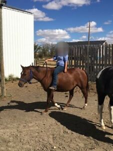 For Sale 2012 Mare