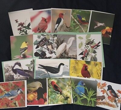 Assorted Bird Print Blank Note Cards