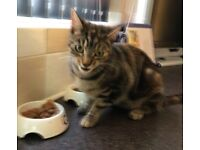 14 month old cat in need of a new home