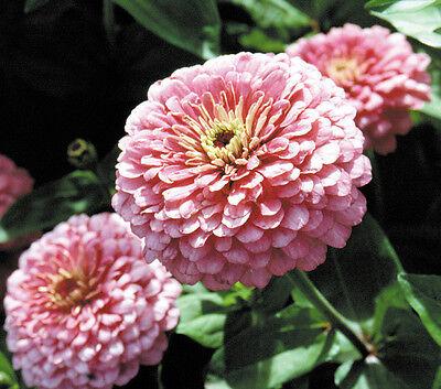 400+ BULK ANNUAL FLOWER GARDEN SEEDS - ...