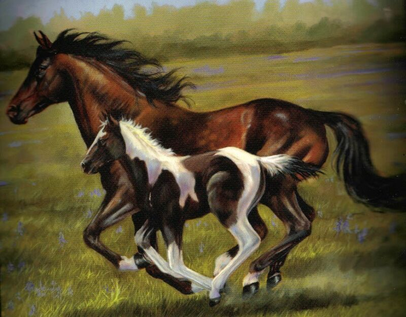 HORSE AND COLT BLANKET - FUZZY SOFT - 50 X 60 NEW - Royal Plush Raschel