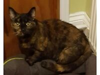 Missing female cat in chase terrace burntwood.