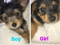 2 beautiful puppies looking for their forever home