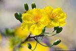Golden Bloom Nursery