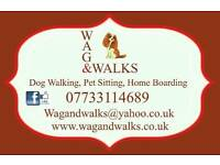 Dog walker and home boarding