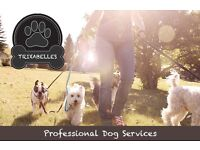 Professional Dog Walking, Sitting & Daycare at Trixabelles Newport Pagnell & Milton Keynes