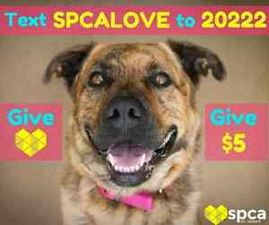 Support SPCA by  Texting SPCALOVE to 20222