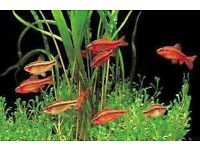 TROPICAL FISH LARGE SELECTION COMMUNITY FISH FROM £1