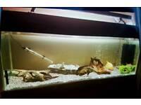6-7ft Fish Tank