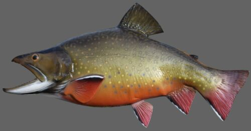 """17""""  Brook Trout - """"Half-Sided"""" for the Budget-Minded!  Brand New!"""