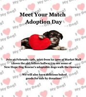 New Hope Dog Rescue's Meet Your Match Adoption Day