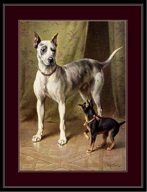 English Print Great Dane Miniature Pinscher Dog Picture