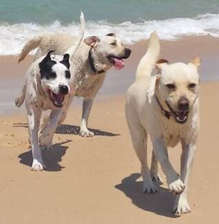 Dog Walking (Beach Playgroup Adventures)