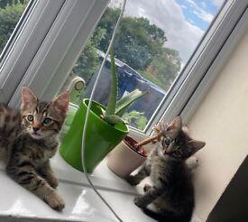 PLAYFUL CUTE LOVING KITTENS SEEK HOMES