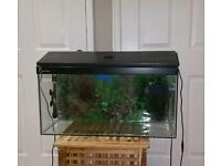 Clearseal Fishtank