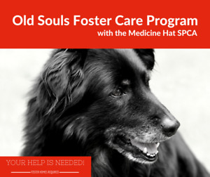 'Old Souls Foster Care Program'.  Medicine Hat SPCA