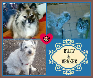 LITTLE BEAKER & RILEY NEED A NEW HOME TOGETHER