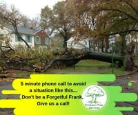 Tree Damage?  Call us for removal!