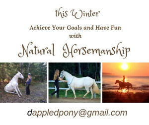 Survive the Winter with Natural Horsemanship!
