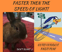 FASTER THAN THE SPEED OF LIGHT!
