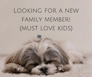 Are you looking to rehome your small dog or know someone who is?