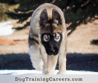 HOW ABOUT A PROFESSIONAL DOG TRAINING CAREER?