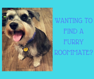 looking for a room for rent/pet friendly
