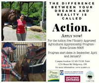 Tuition-Free Agricultural Horse Groom Apprenticeship Program