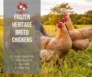 High Quality Frozen Chickens! Great Feeder Alternative!