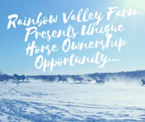 RainbowValley Farm Offers 2 Unique Horse Ownership Opportunities