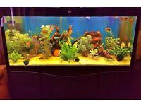 Large Tropical Aquarium / Fish Tank 1000 Litrers
