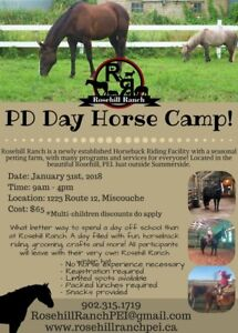 1 SPOT left - PD DAY Horse Camp (January 31st,2018)