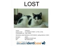 Jerry - Missing Cat - 12yrs old Black&White cat