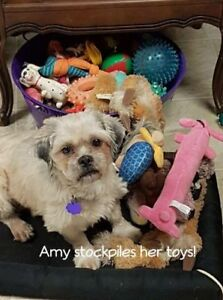 Amy needs a second chance in life and a new home