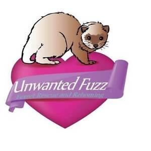 Unwanted Fuzz Ferret Rescue & Boarding Creswick Hepburn Area Preview