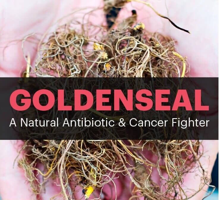 antioxidant all in one - GOLDENSEAL ROOT 520MG 2B - goldenseal standard process 4