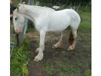 REDUCED! GORGEOUS MARE