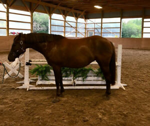 Prospect Pony for Sale
