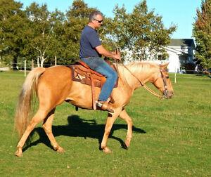 2 Registered palomino AQHA mares