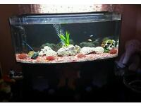 4ft bow front fish tank