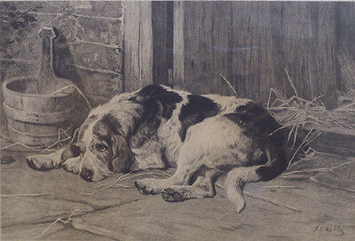 Otterhound Otter Hound Foxhound Hunting Dog Art Engraving 1882 signed J S Noble