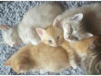 3 beauitfull kitten