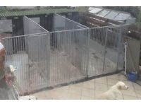 Dog Kennel for up to 5 dogs