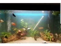 Fluval fish tank with fish