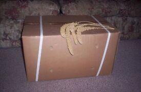millet spray a full box 15kg